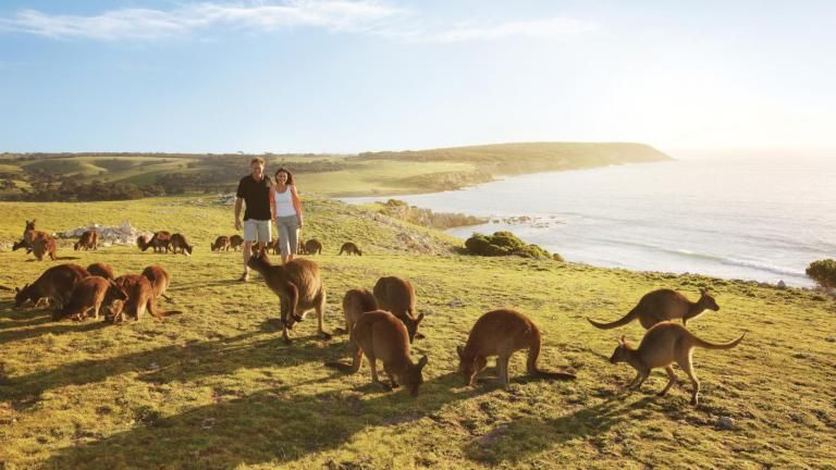 Best Reasons Why You Should Visit Australia